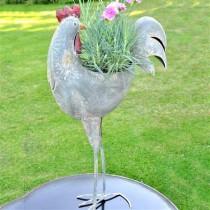 Adobe Cockerel Planter Reflecting