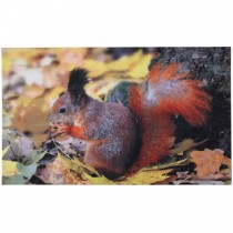 Fallen Fruits - Squirrel Printed Doormat (Rubber)